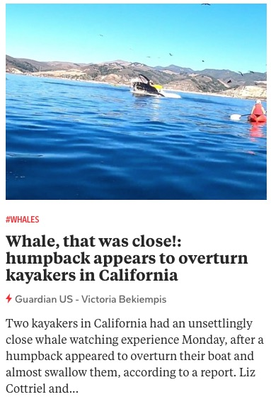 https://www.theguardian.com/us-news/2020/nov/05/california-kayakers-nearly-swallowed-humpback