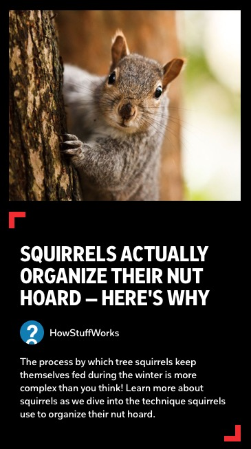 https://flipboard.com/@howstuffworks/squirrels-actually-organize-their-nut-hoard-—-here-s-why-io3pd94hp8abigb7