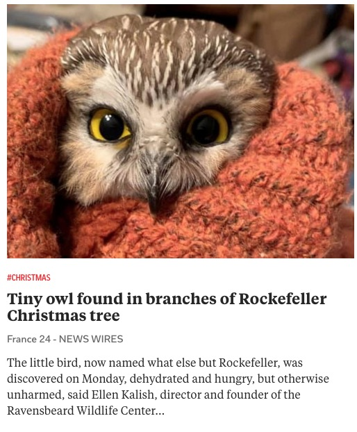 https://www.france24.com/en/americas/20201119-tiny-owl-found-in-branches-of-rockefeller-christmas-tree