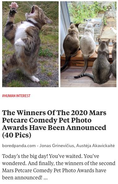 https://www.boredpanda.com/comedy-pet-photography-awards-winners-2020/