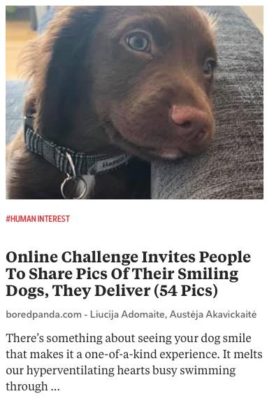 https://www.boredpanda.com/smiling-dog-challenge/